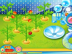 Sue Tomato Factory oyunu