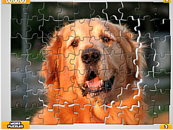 Pet Puzzles: Dogs game